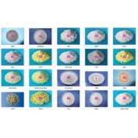 供应橡胶促进剂防老剂防焦剂橡胶助剂