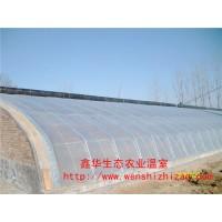 山东日光温室 双层日光温室 阳光板温室建设